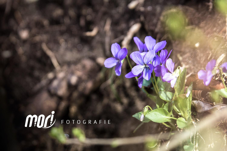 ::: SPRING - by MORI Fotografie :::