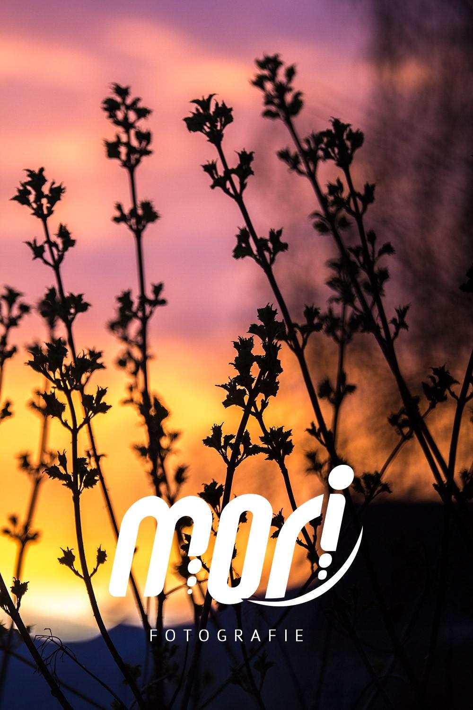 ::: SUNRISE - by MORI Fotografie :::